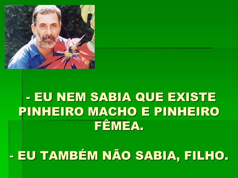- EU NEM SABIA QUE EXISTE PINHEIRO MACHO E PINHEIRO FÊMEA
