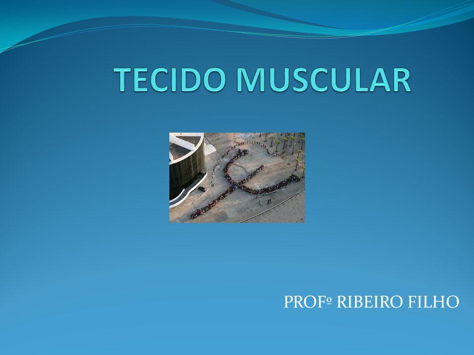 TECIDO MUSCULAR PROFº RIBEIRO FILHO