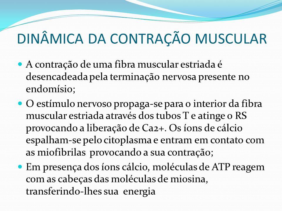 DINÂMICA DA CONTRAÇÃO MUSCULAR