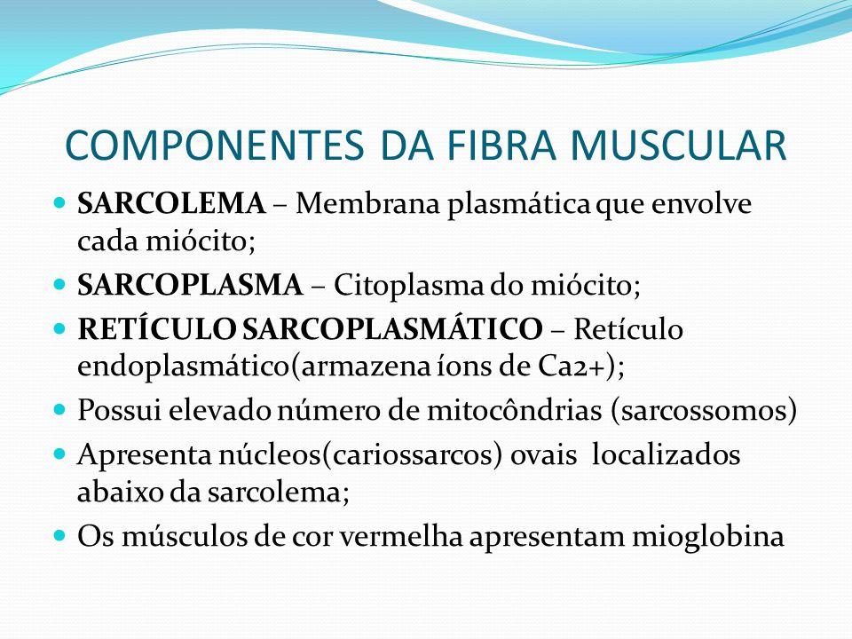 COMPONENTES DA FIBRA MUSCULAR