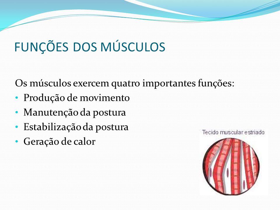 FUNÇÕES DOS MÚSCULOS Os músculos exercem quatro importantes funções:
