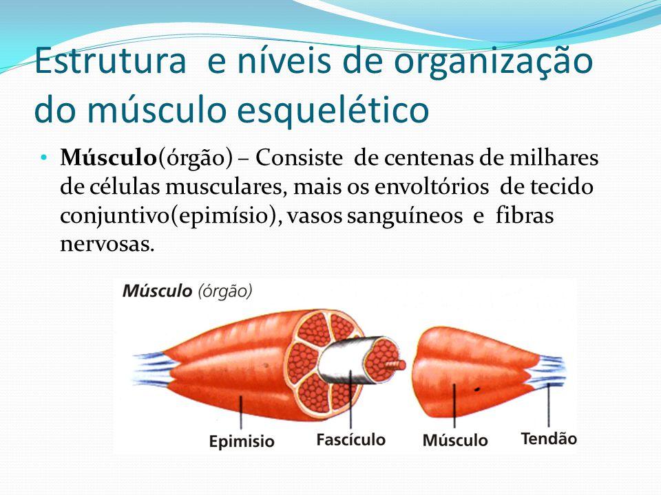 Estrutura e níveis de organização do músculo esquelético