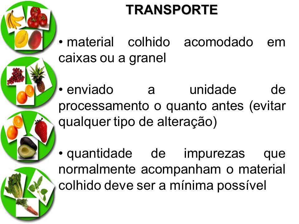TRANSPORTE material colhido acomodado em caixas ou a granel. enviado a unidade de processamento o quanto antes (evitar qualquer tipo de alteração)