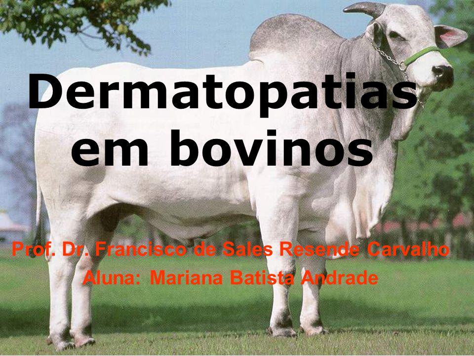 Dermatopatias em bovinos