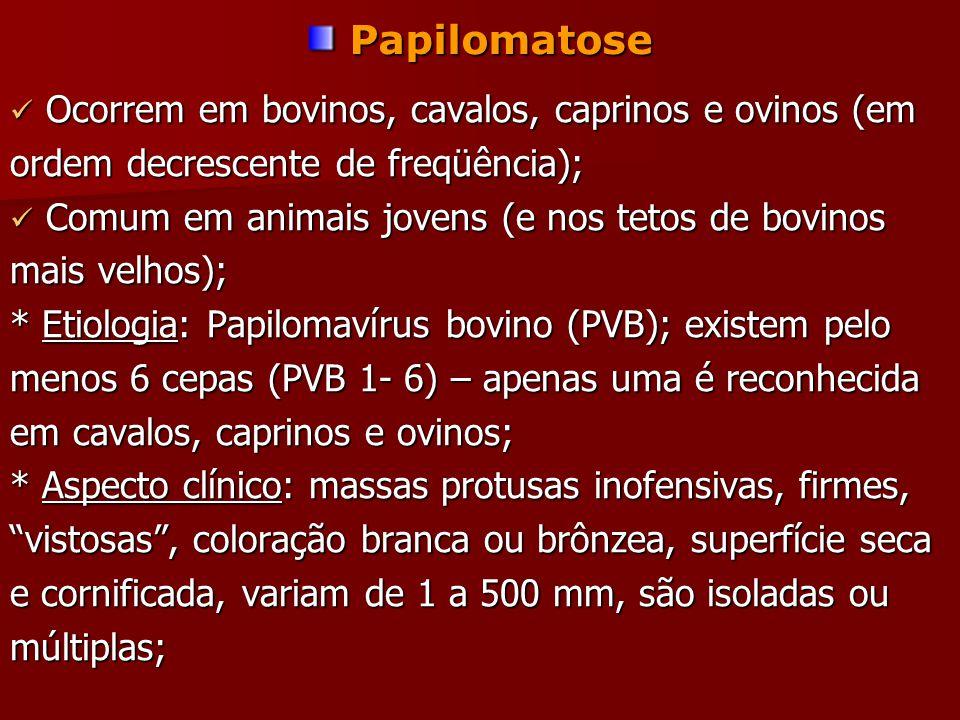 Papilomatose Ocorrem em bovinos, cavalos, caprinos e ovinos (em