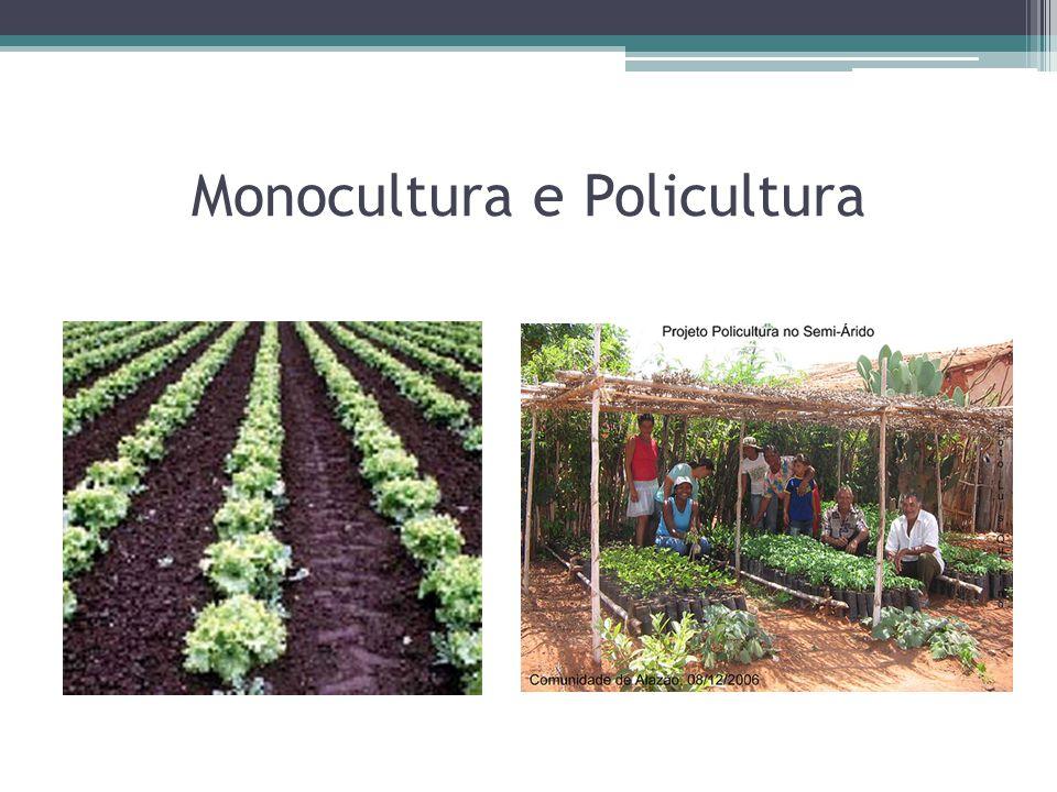 Monocultura e Policultura
