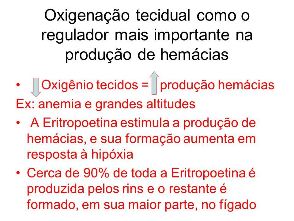 Oxigenação tecidual como o regulador mais importante na produção de hemácias