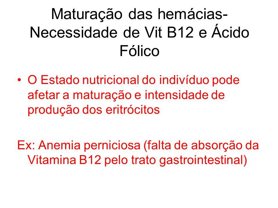 Maturação das hemácias- Necessidade de Vit B12 e Ácido Fólico