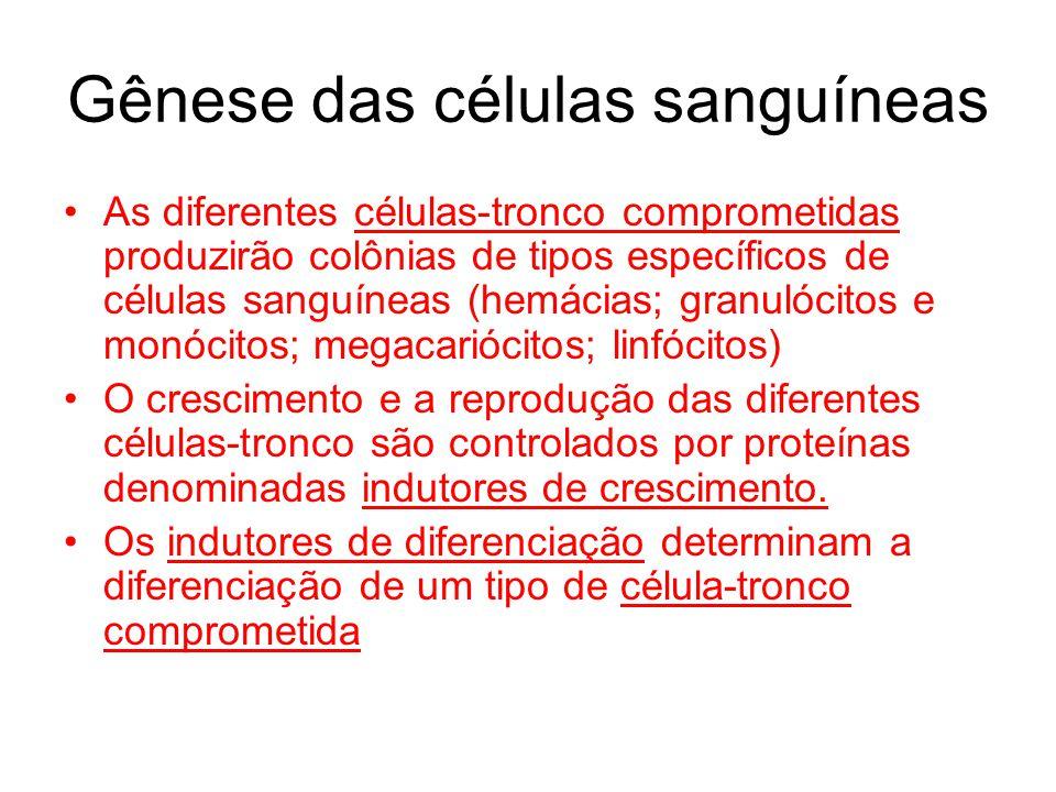 Gênese das células sanguíneas