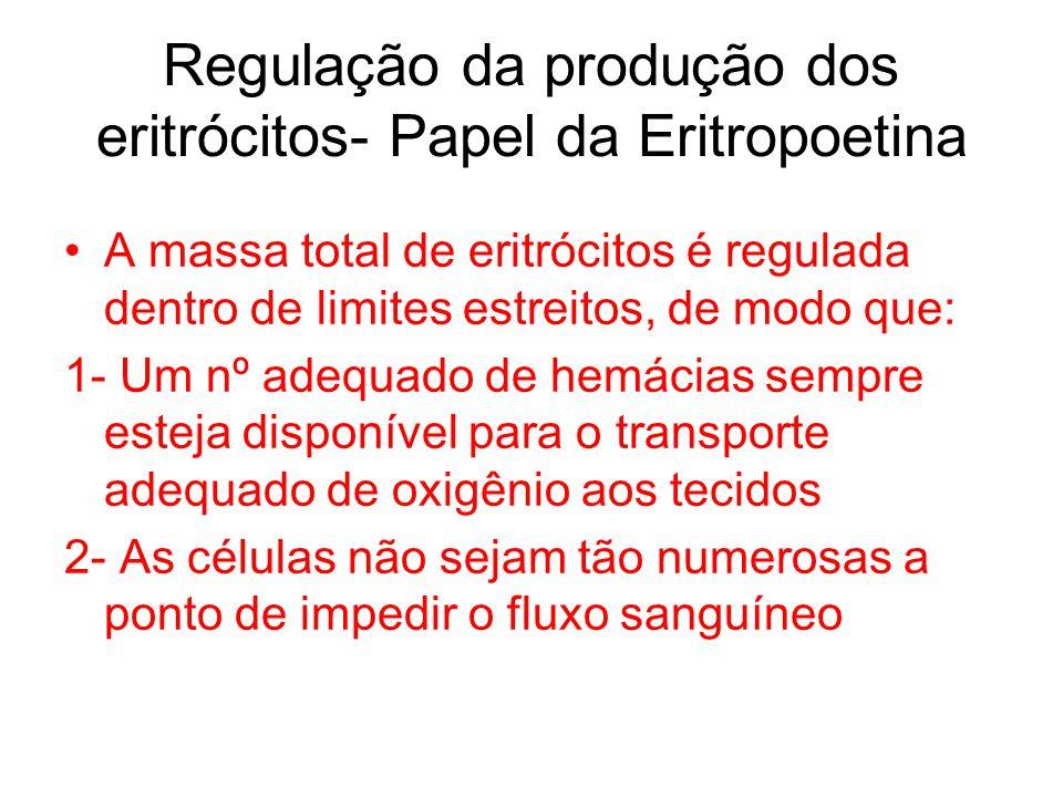 Regulação da produção dos eritrócitos- Papel da Eritropoetina