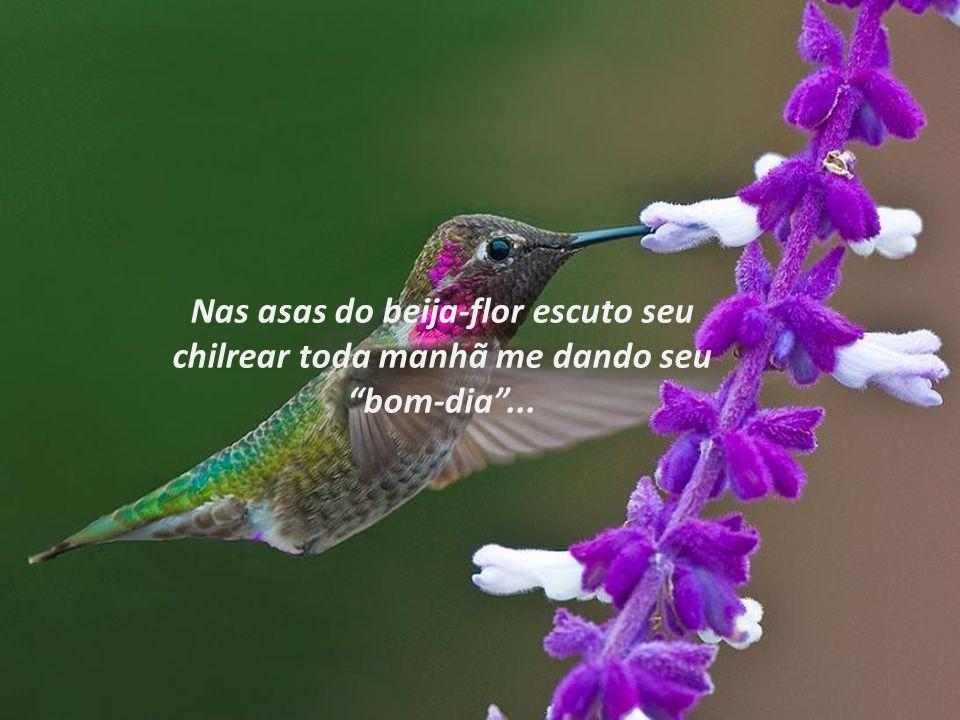 Nas asas do beija-flor escuto seu chilrear toda manhã me dando seu bom-dia ...