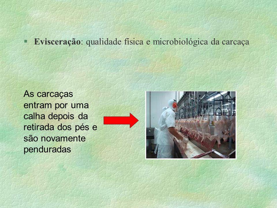 Evisceração: qualidade física e microbiológica da carcaça