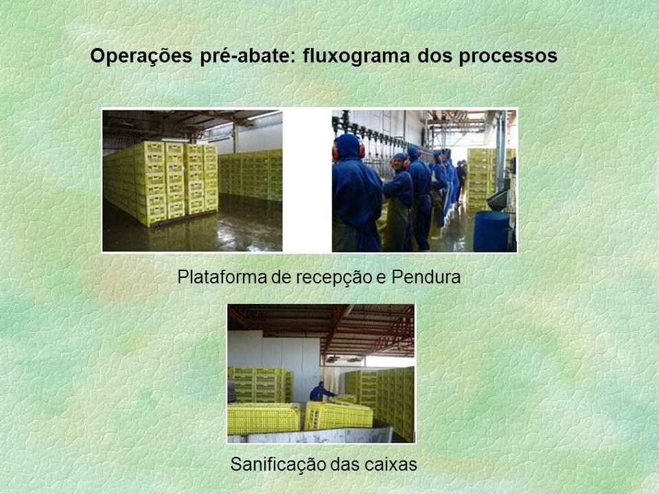 Operações pré-abate: fluxograma dos processos