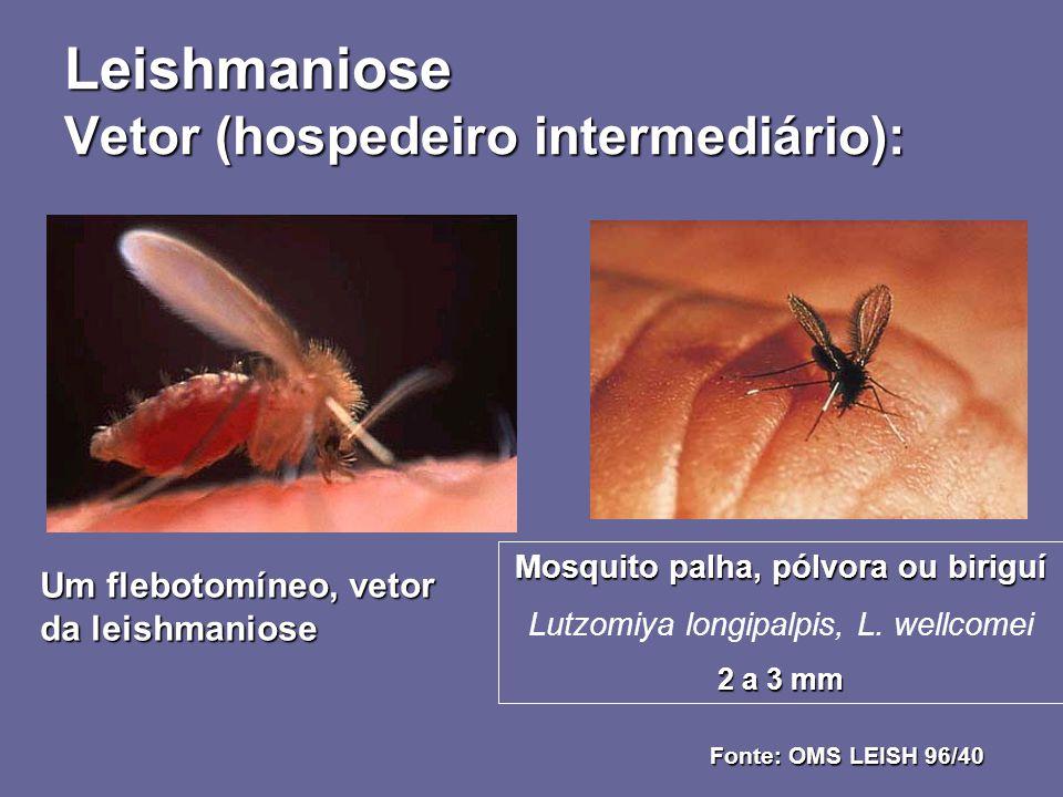 Leishmaniose Vetor (hospedeiro intermediário):