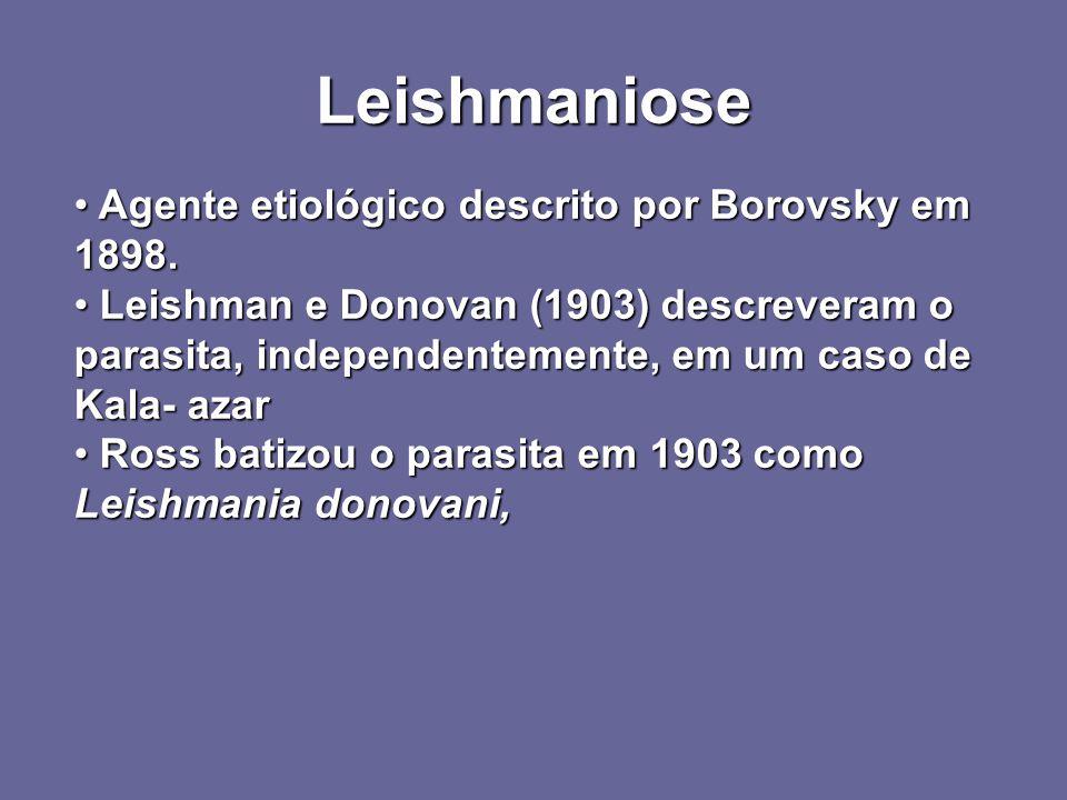 Leishmaniose Agente etiológico descrito por Borovsky em 1898.