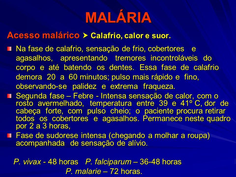 MALÁRIA Acesso malárico  Calafrio, calor e suor.
