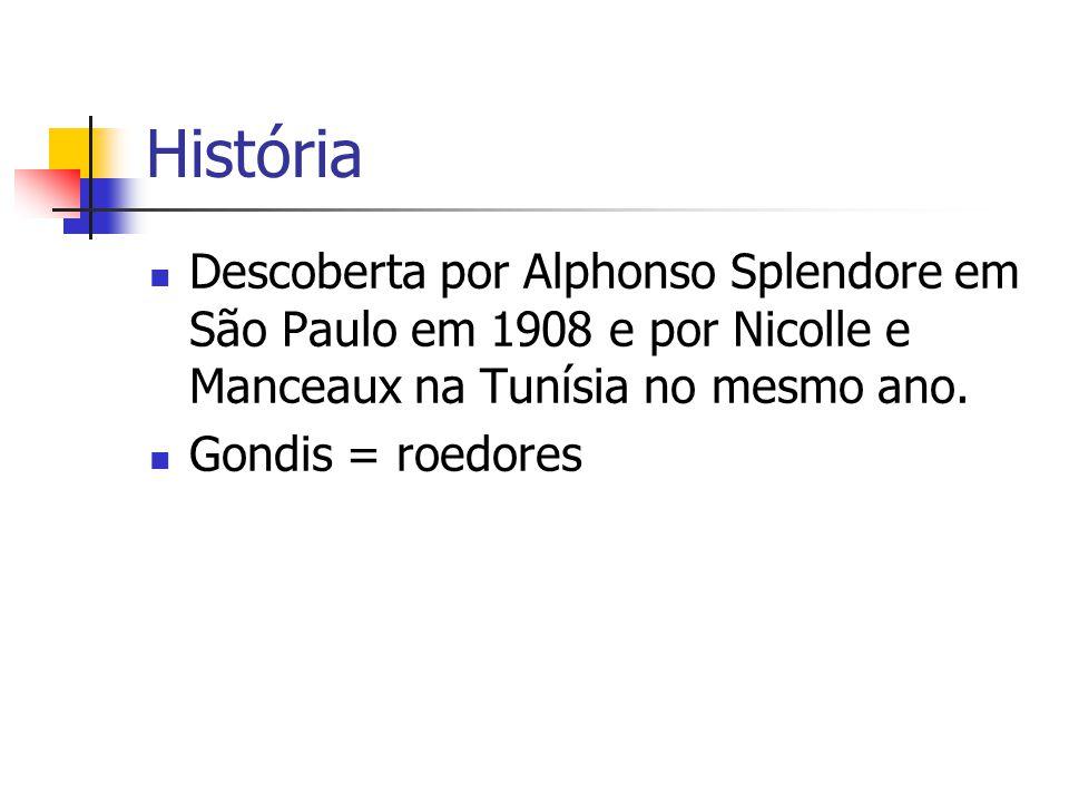 História Descoberta por Alphonso Splendore em São Paulo em 1908 e por Nicolle e Manceaux na Tunísia no mesmo ano.