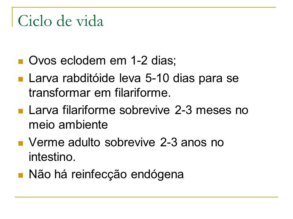 Ciclo de vida Ovos eclodem em 1-2 dias;