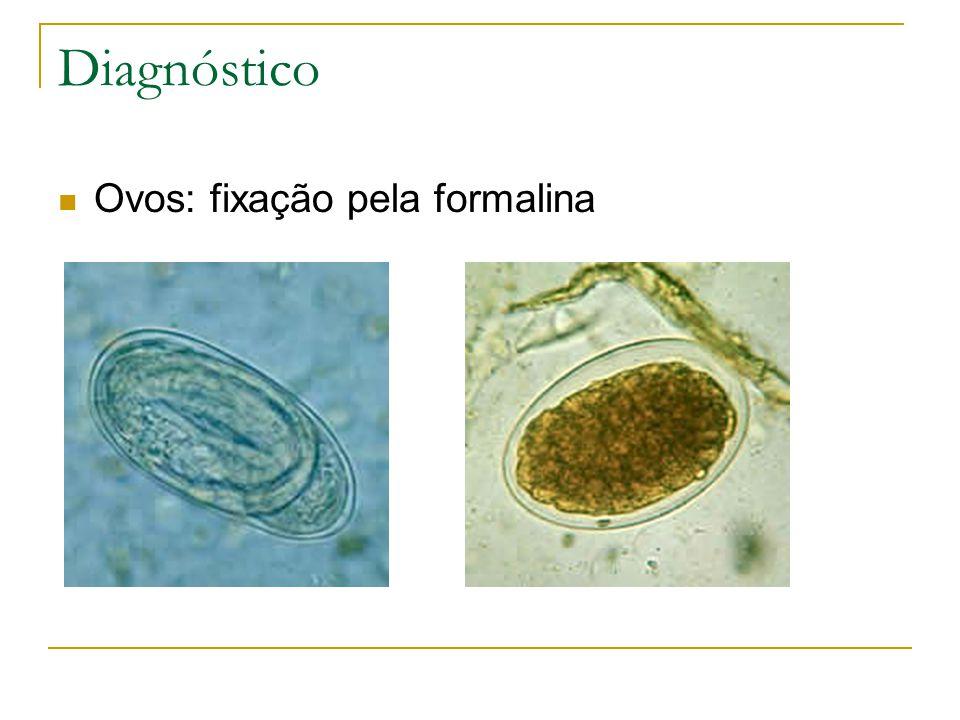Diagnóstico Ovos: fixação pela formalina