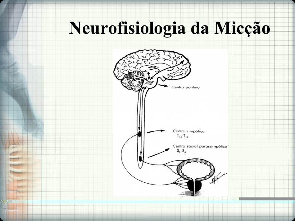 Neurofisiologia da Micção