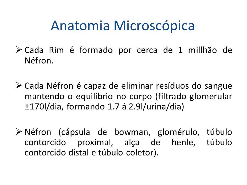 Anatomia Microscópica