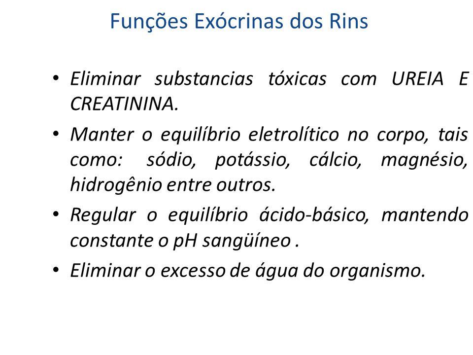 Funções Exócrinas dos Rins