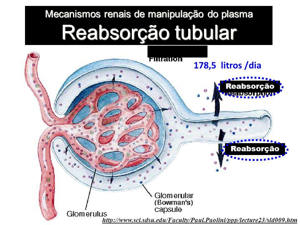 Mecanismos renais de manipulação do plasma Reabsorção tubular