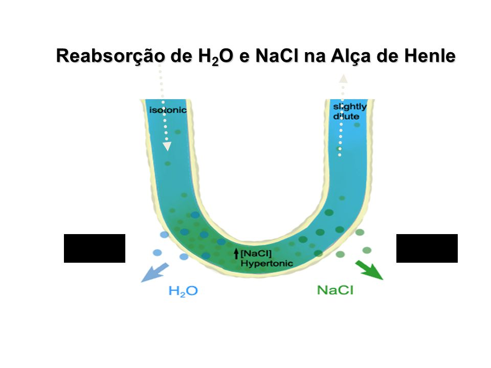 Reabsorção de H2O e NaCl na Alça de Henle