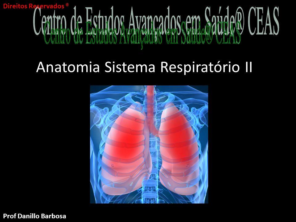 Anatomia Sistema Respiratório II Parte II