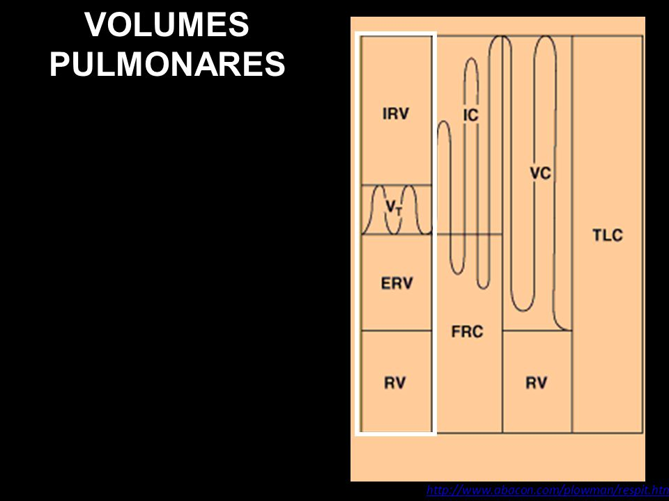 VOLUMES PULMONARES http://www.abacon.com/plowman/respit.html