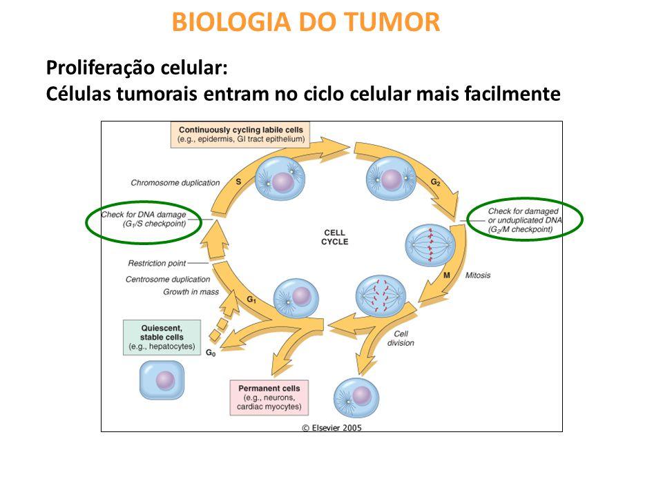 BIOLOGIA DO TUMOR Proliferação celular: