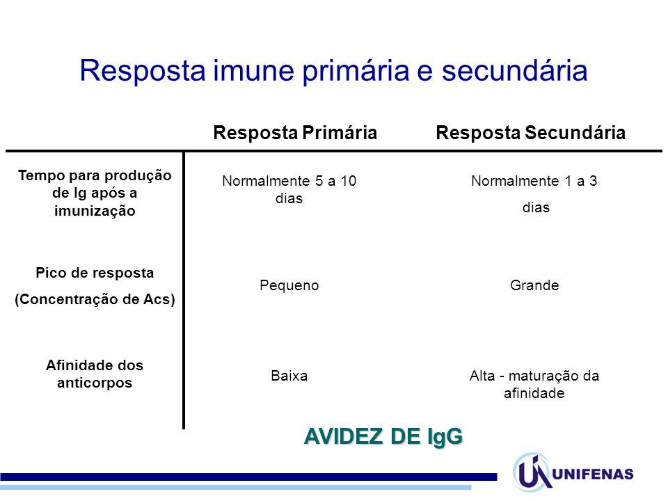 Tempo para produção de Ig após a imunização Afinidade dos anticorpos