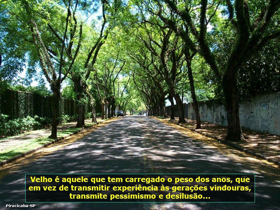 P0001674 - Túnel de Árvores-700