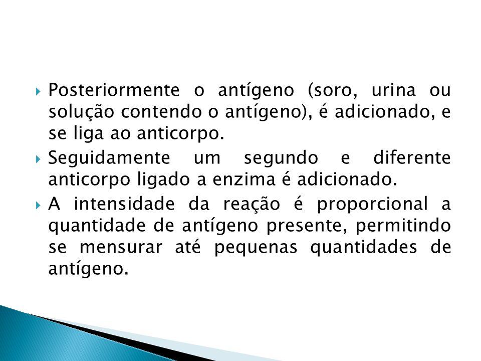 Posteriormente o antígeno (soro, urina ou solução contendo o antígeno), é adicionado, e se liga ao anticorpo.