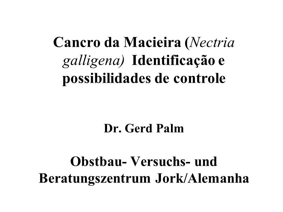 Cancro da Macieira (Nectria galligena) Identificação e possibilidades de controle Dr.