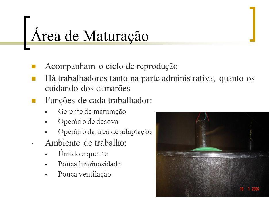 Área de Maturação Acompanham o ciclo de reprodução