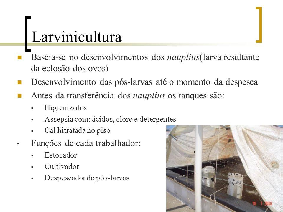 Larvinicultura Baseia-se no desenvolvimentos dos nauplius(larva resultante da eclosão dos ovos)