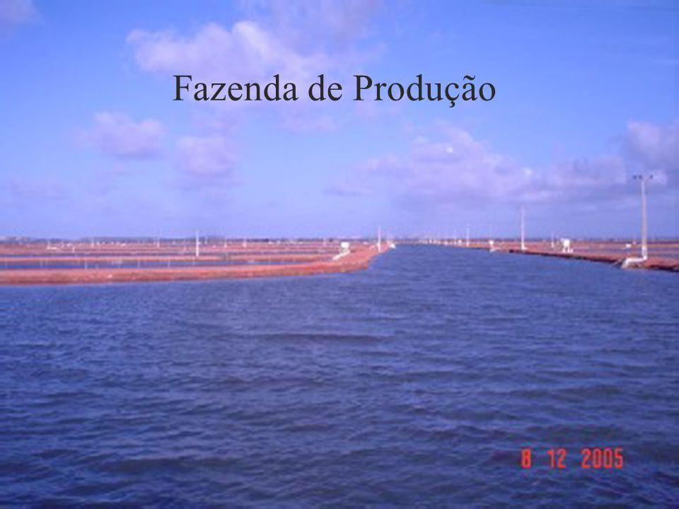Fazenda de Produção