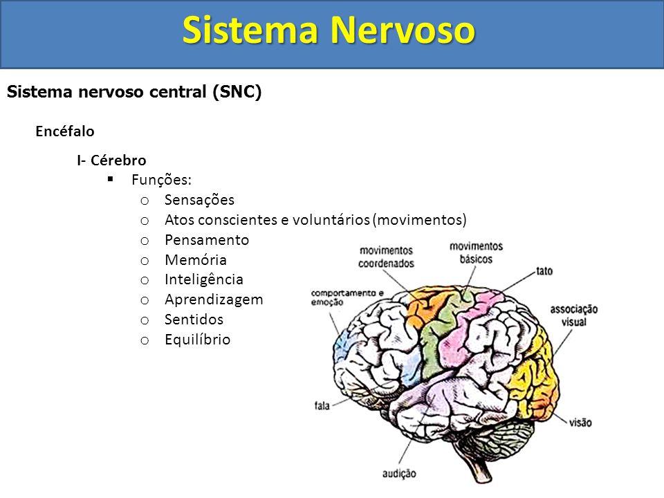 Sistema Nervoso Sistema nervoso central (SNC) Encéfalo I- Cérebro
