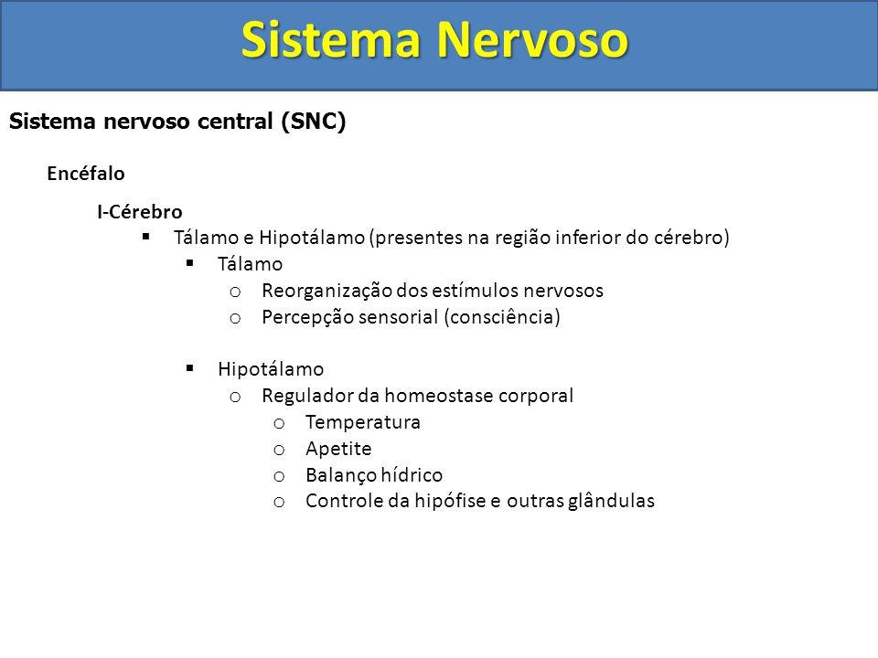 Sistema Nervoso Sistema nervoso central (SNC) Encéfalo I-Cérebro
