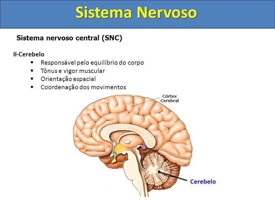 Sistema Nervoso Sistema nervoso central (SNC) II-Cerebelo