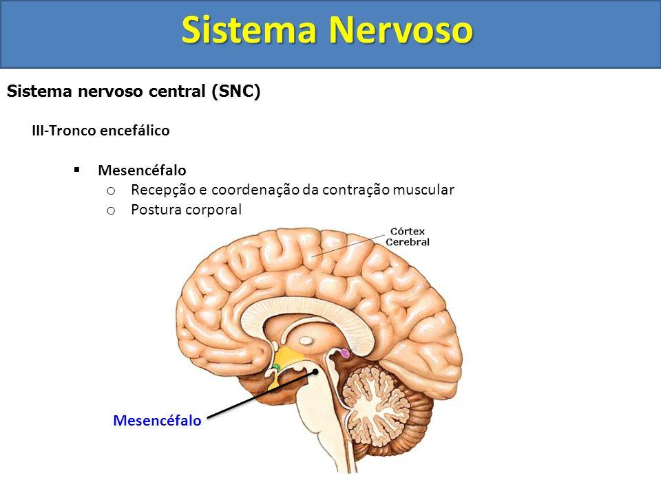 Sistema Nervoso Sistema nervoso central (SNC) III-Tronco encefálico