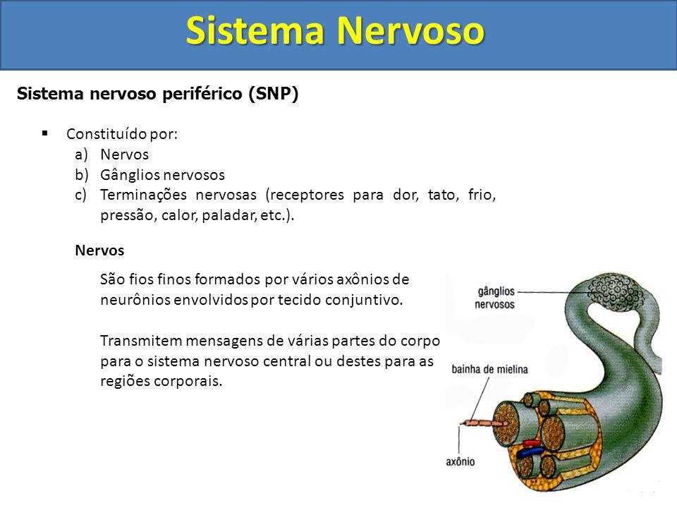 Sistema Nervoso Sistema nervoso periférico (SNP) Constituído por: