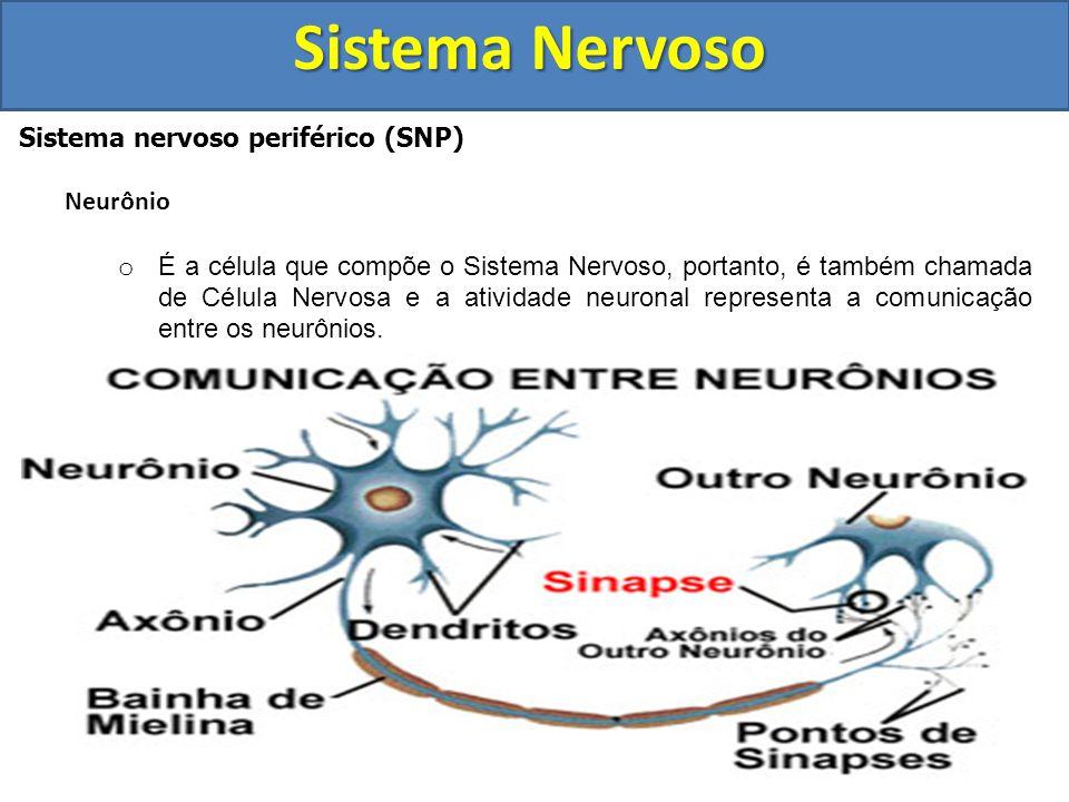 Sistema Nervoso Sistema nervoso periférico (SNP) Neurônio