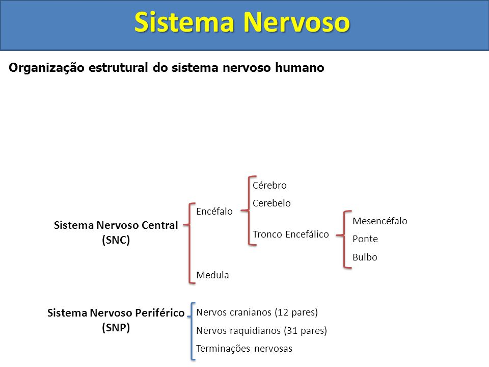 Sistema Nervoso Central Sistema Nervoso Periférico