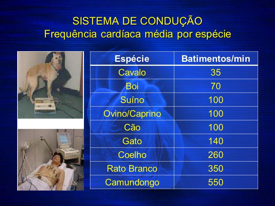 SISTEMA DE CONDUÇÃO Frequência cardíaca média por espécie