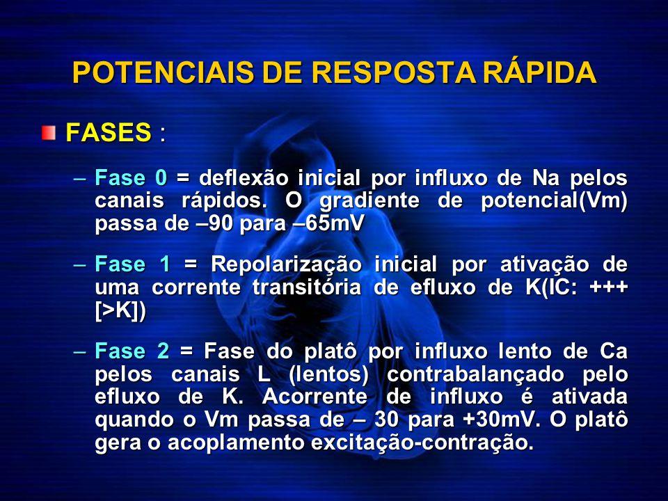 POTENCIAIS DE RESPOSTA RÁPIDA