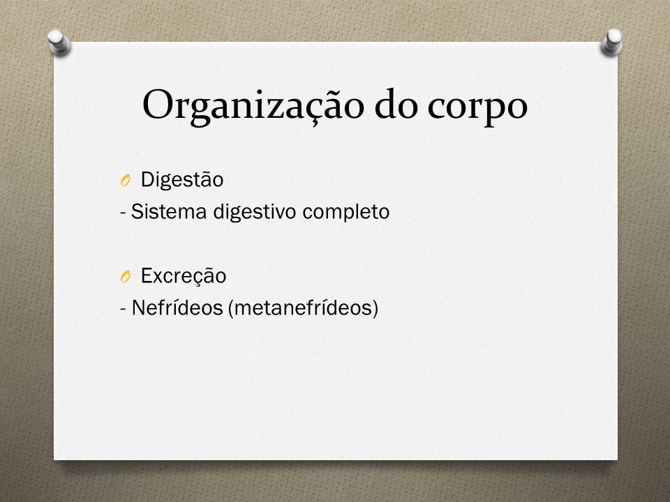 Organização do corpo Digestão - Sistema digestivo completo Excreção