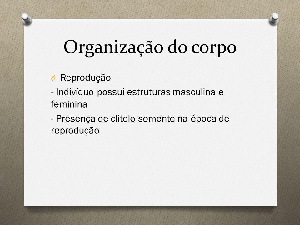 Organização do corpo Reprodução