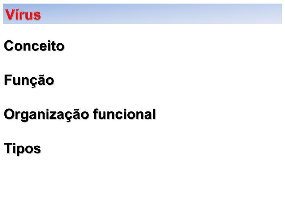 Vírus Conceito Função Organização funcional Tipos